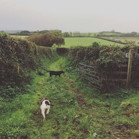 The Countryside Walk - Nearby Footpath